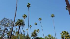 Körning till och med gatorna av Beverly Hills - loppfotografi arkivfilmer