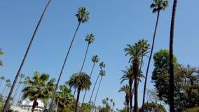 Körning till och med gatorna av Beverly Hills - loppfotografi stock video