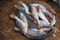 Körper von rohen Fischen bereitete sich für Verkauf auf Fischmarkt vor Stockbild