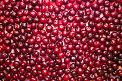 Körsbär är klara för att förbereda sig på köket arkivfoto