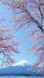Körsbär-blomningar och Mount Fuji som beskådas från Laka Kawaguchiko i Yamanashi, Japan fotografering för bildbyråer