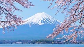 Körsbär-blomningar och Mount Fuji som beskådas från Laka Kawaguchiko i Yamanashi, Japan royaltyfria foton