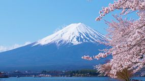 Körsbär-blomningar och Mount Fuji som beskådas från Laka Kawaguchiko i Yamanashi, Japan arkivfoton