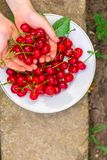 Körsbär, fruktbär, mogna och saftiga frukter för skörd Bästa kopieringsutrymme många bakgrundsklimpmat meat mycket royaltyfria foton