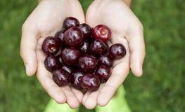 Körsbär i barns händer Arkivfoton