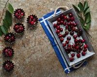 Körsbär i ett muffintenn Arkivbilder