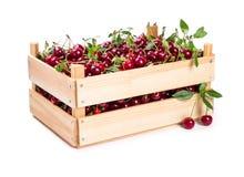 Körsbär i träask Arkivbild