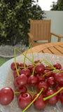 Körsbär i trädgården Arkivfoton
