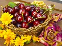 Körsbär med blommor royaltyfri foto