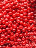 Körsbär med gropar i sockersirap: laga mat körsbärsrött driftstopp Royaltyfri Foto