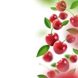 Körsbär och sidor som faller från luften royaltyfri fotografi