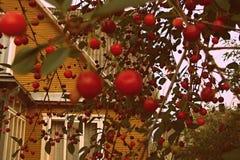 Körsbär på en bakgrund av hus Royaltyfria Bilder