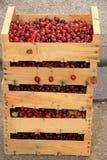 Körsbär på en fransk marknad Royaltyfria Bilder