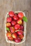 Körsbär-plommon i korg Royaltyfria Foton