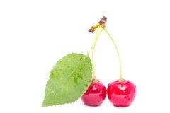 Körsbär som isoleras på en vit bakgrund med det gröna bladet Arkivfoto