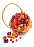 Körsbär, vinbär och krusbär för korgwirh mogen Arkivbilder