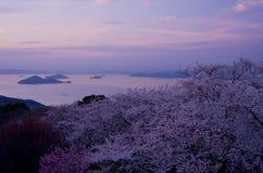 Körsbärblomningar och Seto inlands- hav i aftonen Arkivfoton