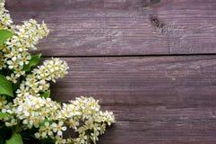 Körsbäret blommar på träbakgrunden Arkivbild