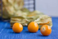 Körsbäret för vintern för guling (för Physalisalkekengi) arkivfoto