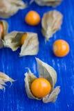Körsbäret för vintern för guling (för Physalisalkekengi) royaltyfri fotografi