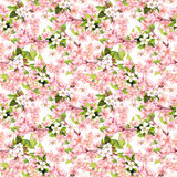 Körsbärsröd blomning - äpple, sakura blommor seamless blom- modell vattenfärg Arkivbild
