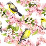 Körsbärsröd blomning - äpplet, sakura blommar, fåglar seamless blom- modell vattenfärg Arkivbild