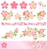 Körsbärsröd blomning royaltyfri illustrationer