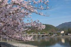 Körsbärsröd blomning, Arashiyama i våren, Kyoto, Japan Royaltyfri Bild