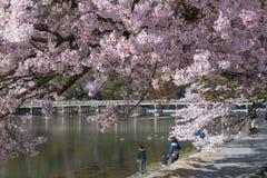 Körsbärsröd blomning, Arashiyama i våren, Kyoto, Japan Fotografering för Bildbyråer