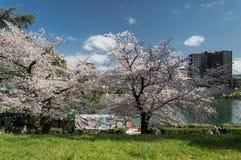 Körsbärsröd blomning, EUR, Rome Fotografering för Bildbyråer