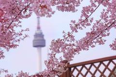 Körsbärsröd blomning för härliga blommor i vår och det namsan Seoul tornet royaltyfri foto