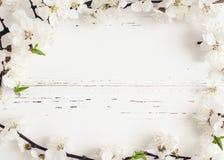 Körsbärsröd blomning för vår på lantlig träbakgrund Arkivbilder