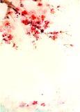 Körsbärsröd blomning för vattenfärgbakgrund Arkivfoto