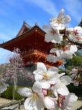 Körsbärsröd blomning i trädgård av templet, Kyoto Japan Fotografering för Bildbyråer