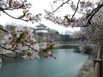 Körsbärsröd blomning, japansk blomningkörsbär med slotten Royaltyfria Foton