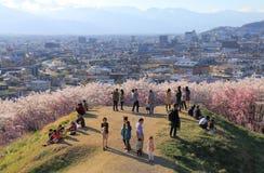 Körsbärsröd blomning Matsumoto Nagano Japan Royaltyfri Fotografi