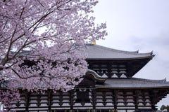 Körsbärsröd blomning mot bakgrunden av den forntida buddistiska templet Todai-ji Royaltyfri Bild