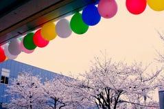 Körsbärsröd blomning och färgrik ballong Arkivfoton