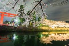 Körsbärsröd blomning och Torii Royaltyfri Bild