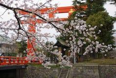 Körsbärsröd blomning och Torii Heian Jingu i Kyoto Royaltyfri Bild