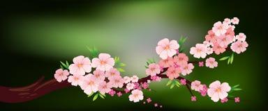 Körsbärsröd blomning på filialen royaltyfri illustrationer