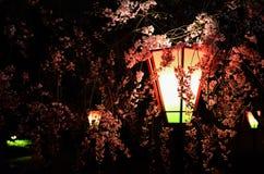 Körsbärsröd blomning på natten, Osaka Japan Royaltyfri Fotografi