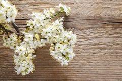 Körsbärsröd blomning på trä Royaltyfri Bild