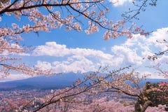 Körsbärsröd blomning sakura i vårsäsong och Mt fuji royaltyfria foton