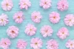 Körsbärsröd blomning, sakura på bästa sikt för blå träbakgrund Royaltyfria Bilder