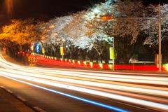 Körsbärsröd blomningsäsong på natten Arkivbild