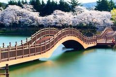 Körsbärsröd blomningsäsong i korea Arkivfoto