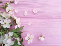 Körsbärsröd design för skönhetblomningfriskhet på en rosa träbakgrund, vår arkivfoton