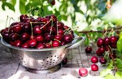 Körsbärsröd korg Cherry Tree Branch nytt moget för Cherry söt ch Arkivfoton