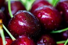 Körsbärsröd korg Cherry Tree Branch nytt moget för Cherry söt ch Royaltyfri Fotografi